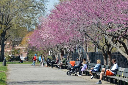 McCarren Park (Brooklyn, NY)