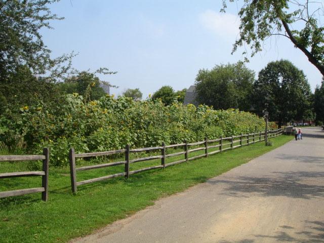 Queens Farm Park (Queens, NY)