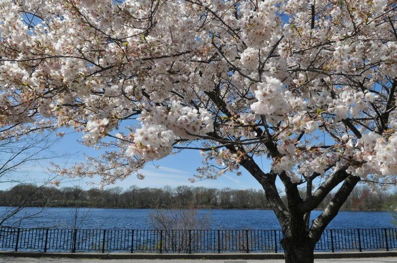 Silver Lake Park (Staten Island)