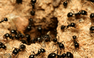 What's It Like Inside An Ant Colony? (Animated Video)