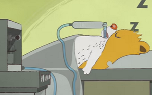 How Exactly Does Anesthesia Work… And How Is It Different From Sleep? (Animated Video)
