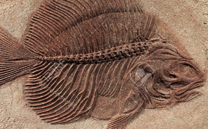 The Mystery Of The Missing Fossils (Video & Audio)