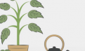 The History Of Tea (Animated Video)