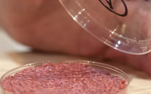 Would You Eat Lab Grown Meat? (Video)