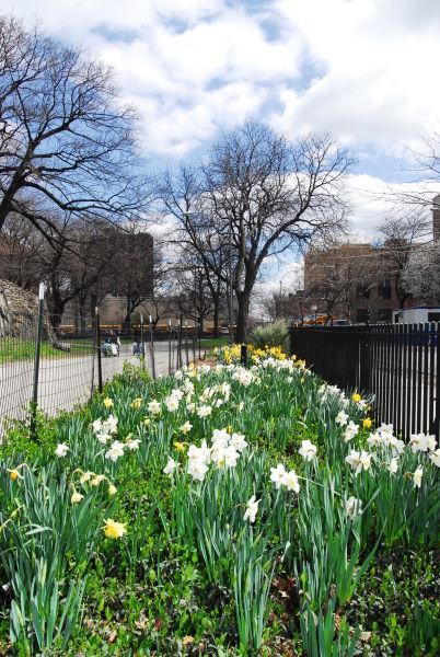 Marcus Garvey Park (New York, New York)