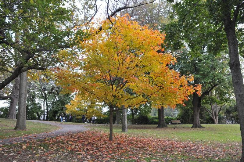 Von Briesen Park ( Staten Island)