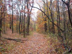 Long Pond Park ( Staten Island)