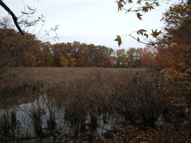 Siedenburg Park ( Staten Island)
